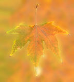 在抽象背景的秋天叶子 图库摄影