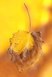 在抽象背景的秋天叶子 免版税库存图片