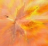 在抽象背景的秋天叶子 库存图片