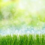 在抽象背景的绿草 免版税库存照片