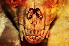 在抽象背景的Fox头骨 库存图片