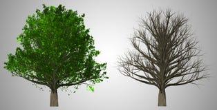 在抽象背景隔绝的树, 3D例证 库存图片