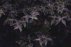 在抽象霓虹口气的花 免版税库存照片