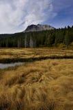 在拉森火山下的秋天草 库存照片
