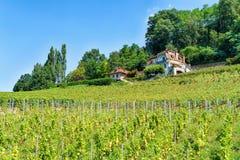 在拉沃葡萄园梯田拉沃葡萄园梯田附近Oron瑞士葡萄园大阳台的瑞士山中的牧人小屋  免版税图库摄影