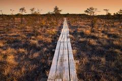 在拉脱维亚沼泽的木人行桥, 库存照片