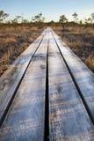 在拉脱维亚沼泽的木人行桥, 库存图片