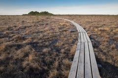 在拉脱维亚沼泽,早期的春天的木人行桥 免版税库存图片
