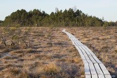 在拉脱维亚沼泽,早期的春天的木人行桥 库存图片