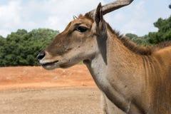 在拉马干徒步旅行队公园的早晨游览 库存图片