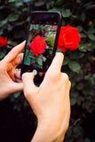 在拍摄花的cellphot的手 免版税库存图片