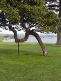 在拐杖的结构树 免版税库存照片