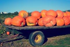 在拖车的巨型南瓜 免版税库存照片