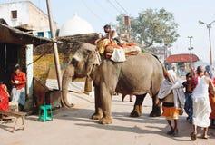 在拥挤村庄街道的走的印度象 免版税库存图片