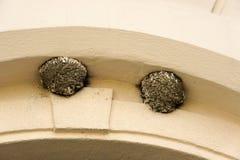 在拱廊下的燕子巢 免版税库存图片