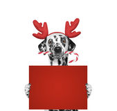 在拿着与空间的驯鹿鹿角的狗一张卡片文本的 免版税库存图片
