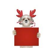 在拿着与空间的驯鹿鹿角的逗人喜爱的狗一张卡片文本的 免版税库存图片
