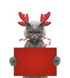 在拿着与空间的驯鹿鹿角的逗人喜爱的猫一张卡片文本的 库存照片