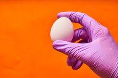 在拿着鸡鸡蛋的一副蓝色手套的一个人的手 免版税库存照片