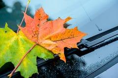 在挡风玻璃的秋叶 库存图片