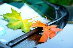 在挡风玻璃的秋叶 免版税图库摄影