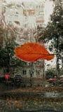 在挡风玻璃的秋天叶子 库存图片