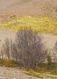 在挪威中间的美丽的沙丘 北沙漠在中央斯堪的那维亚在秋天 免版税库存图片