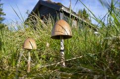 在挪威村庄前面的蘑菇 库存图片