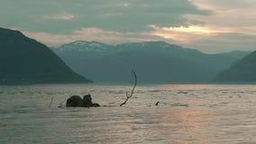 在挪威海湾的日落 股票视频