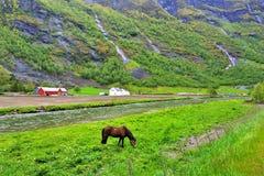 在挪威的本质的全景 Flom,挪威 免版税库存照片