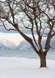 在挪威的结构树 免版税库存图片