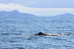 在挪威spermwhale附近的海岸线 免版税库存照片