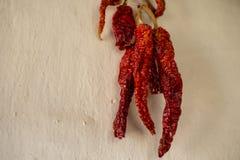 在捆绑的干红辣椒在墙壁上 免版税库存照片