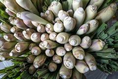 在捆绑的新近地被收获的柠檬香茅词根被显示在蔬菜水果商的商店 免版税库存照片
