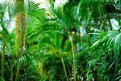在掌上型计算机天空结构树的蓝色 夏天、假日和旅行概念与拷贝空间 与太阳光线影响的棕榈分支 图库摄影