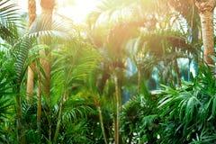 在掌上型计算机天空结构树的蓝色 夏天、假日和旅行概念与拷贝空间 与太阳光线影响的棕榈分支 库存照片