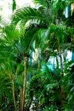 在掌上型计算机天空结构树的蓝色 夏天、假日和旅行概念与拷贝空间 与太阳光线影响的棕榈分支 库存图片