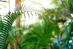 在掌上型计算机天空结构树的蓝色 夏天、假日和旅行概念与拷贝空间 与太阳光线影响的棕榈分支 免版税库存照片