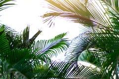 在掌上型计算机天空结构树的蓝色 夏天、假日和旅行概念与拷贝空间 与太阳光线影响的棕榈分支 免版税库存图片