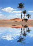 在掌上型计算机撒哈拉大沙漠结构树附近的沙漠湖 免版税库存照片