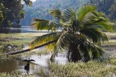 在掌上型计算机河结构树的印地安人 库存图片