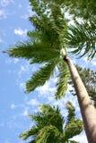 在掌上型计算机热带天空的结构树 库存图片