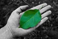 在掌上型计算机的绿色叶子 免版税库存照片