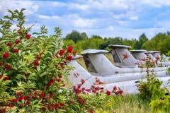 在接骨木浆果灌木,航空L-29 Delfin玛雅人捷克斯拉夫的军事喷气机教练员的老航空器 库存图片