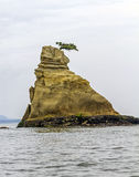 在推出从海,日本的岩石的上面的小杉木 库存图片