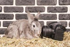 在摄象机镜头的兔子 库存照片