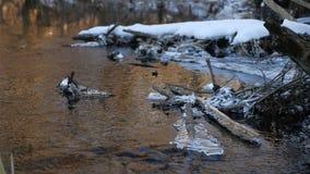 在摇摆一个干燥的分支的森林河流动的美丽的结冰的冰,自然阳光,太阳强光风景 股票视频
