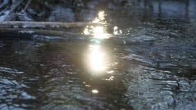 在摇摆一个干燥的分支的森林河流动的美丽的结冰的冰,阳光,自然太阳强光风景 股票录像