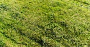 在摇摆在风的干草原草的飞行 俄国 股票录像