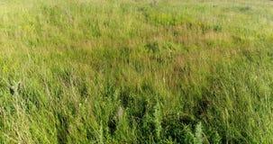 在摇摆在风的干草原草的飞行 俄国 影视素材